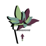 shaky plant - swipe up